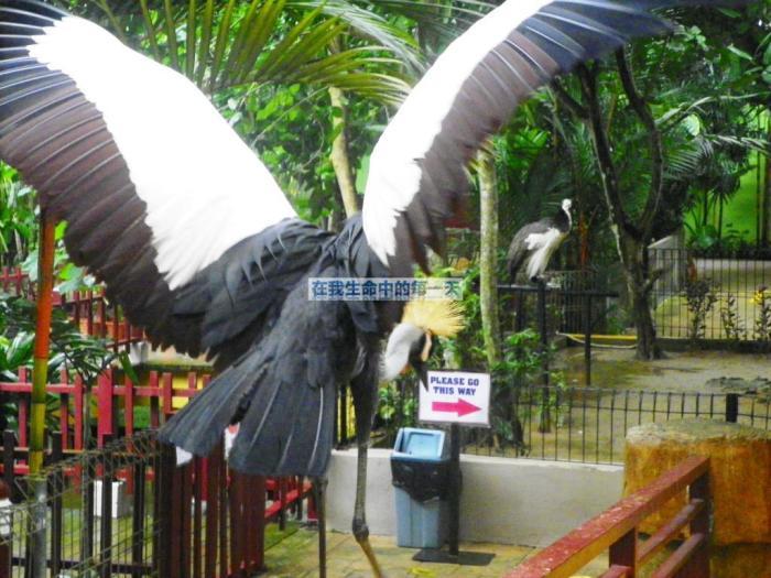 它就突然在我身后张开翅膀,吓我一跳
